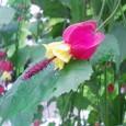 南国風の花