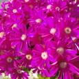 とっても元気な色の花