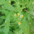 ちっちゃな野の花3