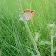 小さな蝶々