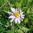霜月の日に揺れる野菊