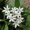白い春の花