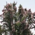 高い木の花