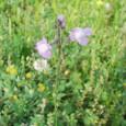 名も知らぬ薄紫の小花
