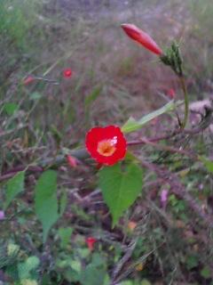 ちっちゃな野の花2